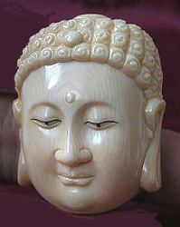 Ivory Buddha head - Chinese 20th C